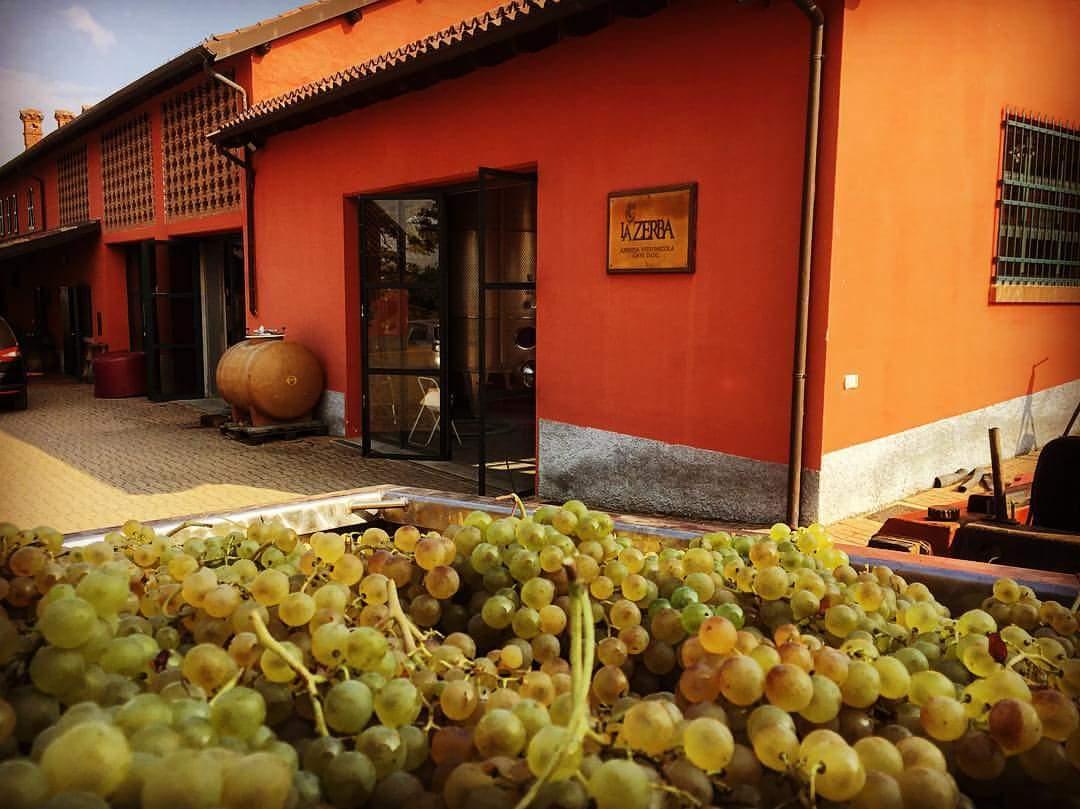 vendange-vin-italien-zerba